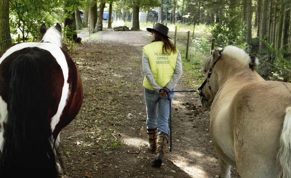 Werken met dieren, paarden